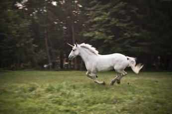 Horse, nature, white, unicorn wallpaper