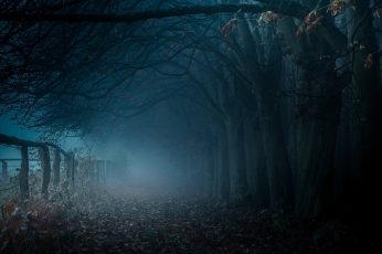 Brown bare trees, dark pathway with dead trees and fog, mist