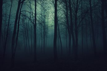 Dark Forest, forest illustration, Nature, Forests, tree, plant