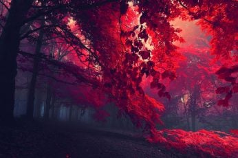 Black and red trees, sun rays through red trees, dark, nature