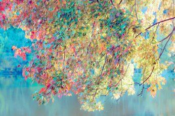 Nature, texture, pattern, design, wallpaper, art, grunge, colorful wallpaper