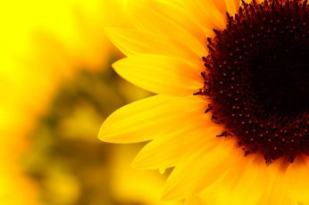 Aesthetic flower desktop wallpaper