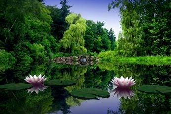 Two pink bloomed flowers, water lilies, leaves, pond, bridge wallpaper