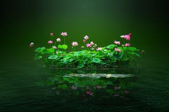 Lotus pond, lotus, flowers, pink, water, petal, Lotus leaf, green wallpaper
