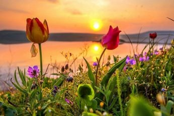 Flower field, crimea, steppe, evening, tulips, grass, sunlight wallpaper