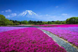 Landscape, sky, clouds, meadow, grass, summer, flowers, mount fuji wallpaper