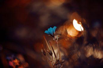 Wallpaper blue petaled flowe, shallow focus photography of blue flower