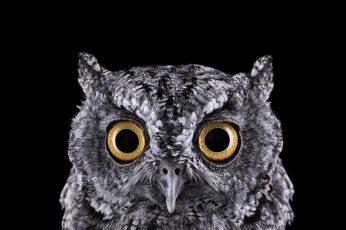 Wallpaper grey owl, selective focus photograph of owl face, photography