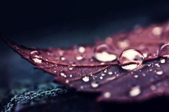 Wallpaper brown leaf, nature, leaves, water, macro, water drops, plants