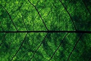 Wallpaper green leaf, green leaf, plants, macro, leaves, backgrounds, full frame