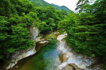 Green-leafed trees wallpaper, landscape, nature, spring, river, shrubs