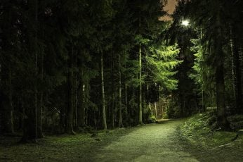 Green leafed tree wallpaper, landscape photography of green leaf trees during nighttime