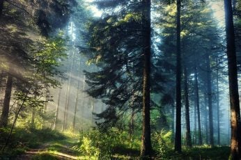 Green forest wallpaper, landscape photography of a forest, trees, sun rays