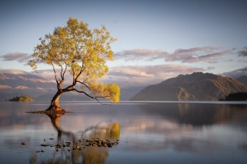 Green leafed tree wallpaper, landscape, nature, lake, trees, mountains