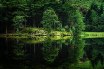 Green leafed trees wallpaper, nature, landscape, mirror, water, lake, forest