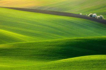 Green grass fields wallpaper, hills, trees, nature, landscape, photography