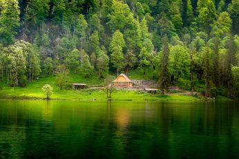 Green leafed trees wallpaper, nature, landscape, lake, forest, grass, mist