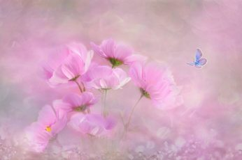 Pink cosmos flowers painting wallpaper, nature, plant, color, background