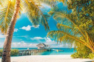 Wallpaper sea, sunny day, sunshine, summertime, beach, palm, tourism