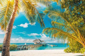 Wallpaper sea, sunny day, sunshine, summertime, beach, palm, tourism
