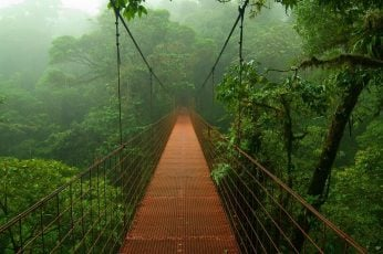 Wallpaper bridge, nature, suspension bridge, structure, track, architecture
