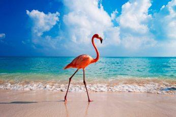Wallpaper beak, dutch caribbean, abc islands, caribbean sea, aruba, summer