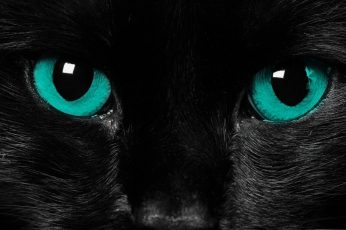 Short-haired black cat wallpaper, eyes, close-up, animal themes, one animal