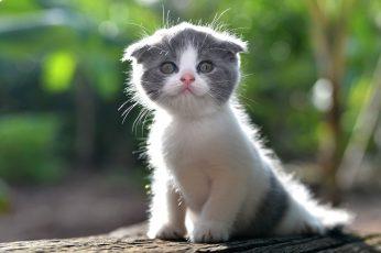 Cute kitten wallpaper, furry cat