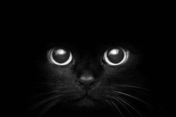 Black cat digital wallpaper, monochrome, dark, animals, black background