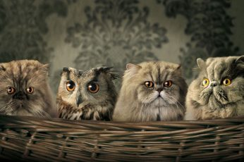 Funny cute animals wallpaper, hd background, best