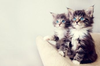 Cute Kittens HD Wallpaper, white and black kittens, Animals, Pets