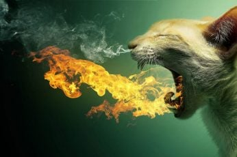 Funny wallpaper animal, silhouette, art, design, symbol, cat, fire, light, digital art