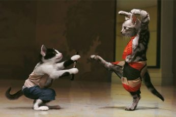 Funny cats background, fight