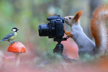 Funny wallpaper, squirrel, bird, photo, mushroom, animals