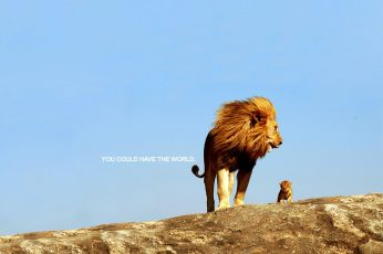 Lion wallpaper, quote, inspirational, animal, animal themes, sky, rock