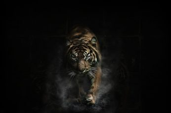 Adult brown tiger wallpaper, animals, dark, artwork, animal themes, one animal