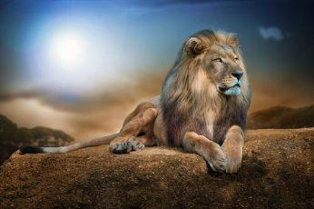 Lion animal wallpaper, animals, nature, wildlife, rock, digital art, big cats