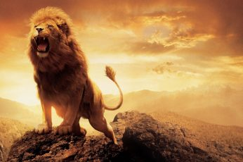 Adult lion wallpaper, artwork, sky, animals, animal themes, mammal, one animal