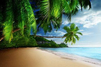 Coconut trees near ocean digital wallpaper, sea, tropical, beach