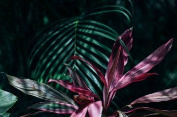 Pink and Green Linear Leaf Plants wallpaper, beautiful, botanical, close-up