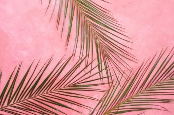 Pink Wall wallpaper, palm, leaf, tropical, background, pastel, summer, green