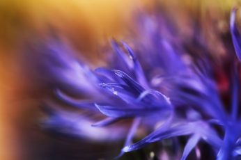 Selective focus photography of purple flower wallpaper, bokeh, nature, close-up