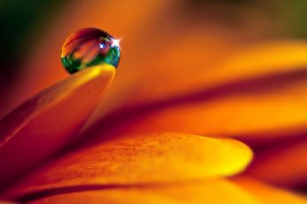 Orange petaled flower and dewdrop wallpaper, petals, flowers, macro, water drops