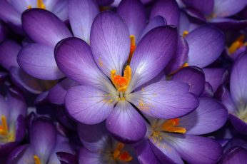 Tilt lens photography of purple and yellow flower wallpaper, nature, plant