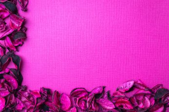 Photo of Pink Flowers on Pink Textile wallpaper, art, close-up, color, design