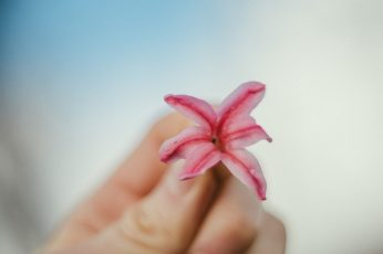Flower wallpaper, forest, nature, pink, hand, botanik, botaniq, blue