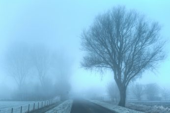 Withered trees during foggy winter day wallpaper, Emotion, morgens, de