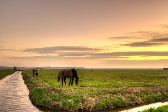 Brown horse on green grass field under cloudy sky wallpaper, horses, horses