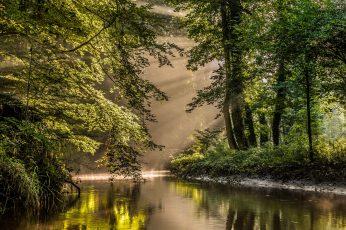 Forest wallpaper, trees, river, Netherlands, reserve, Nederland, Bekendelle