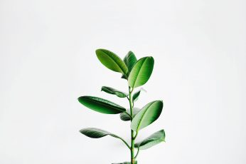Green leaf plant wallpaper, green leafed plant, minimal, botanical, stem